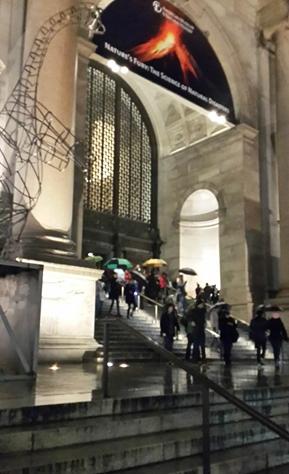 newyork (3)